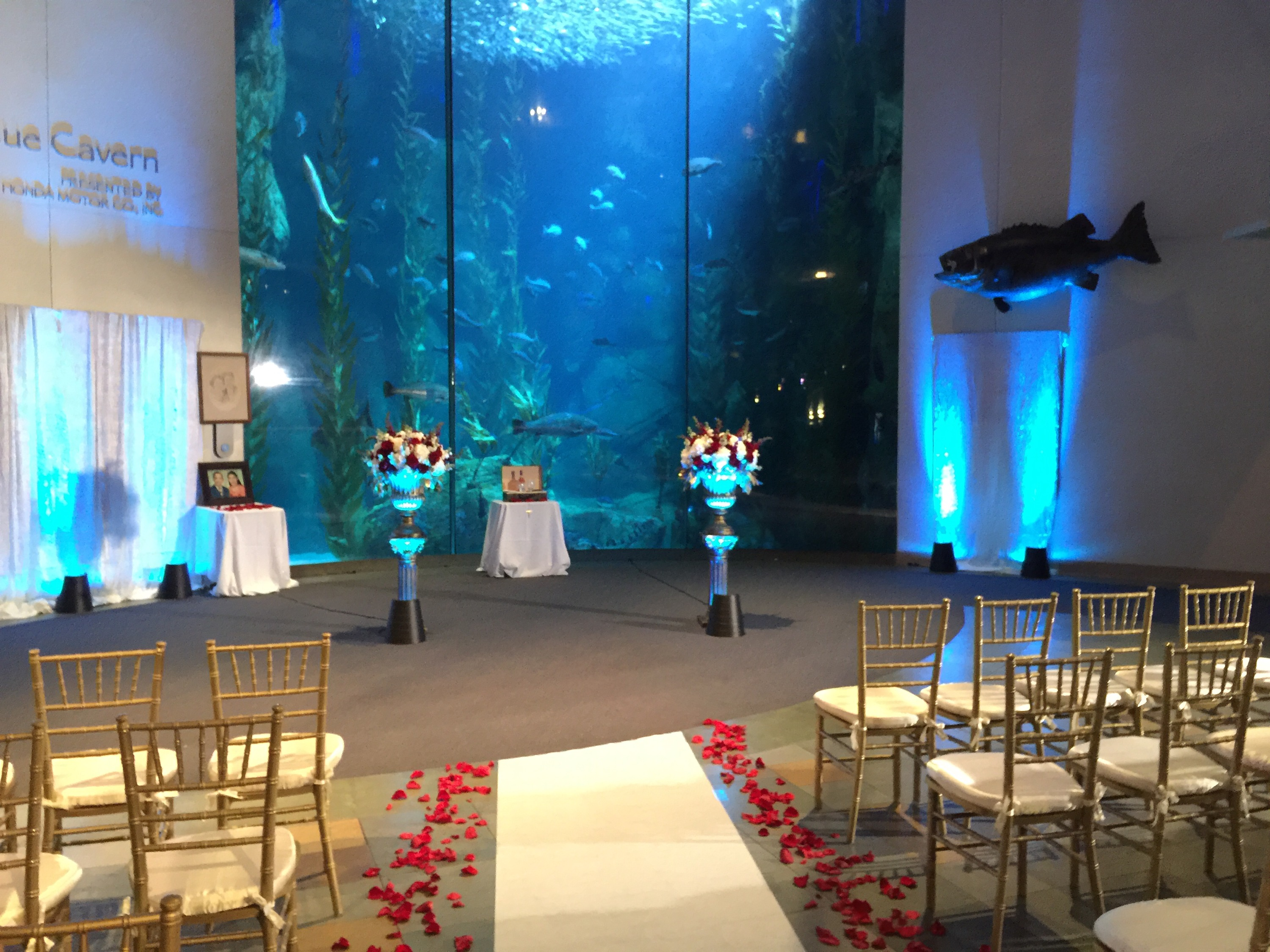 Wedding at the Aquarium of the Pacific in Long Beach Great